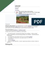 Climat subecuatorial.docx
