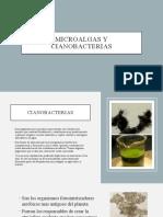 Microalgas y cianobacterias