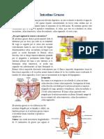 intestino grueso.docx