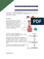 Patología del sistema endocrino - glandula suprerrenal