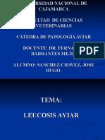 LEUCOSIS LINFOIDE