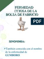PRESENTACION DE GUMBORO