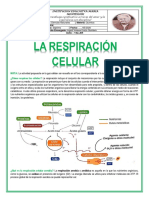 respiraion  celular