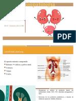 Sistema Urinario (fisiopatologia)