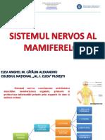 sistemul nervos la mamifere