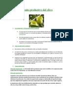Circuito productivo del olivo.docx