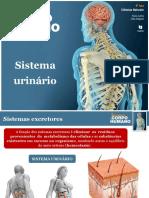 Sistema_urinário