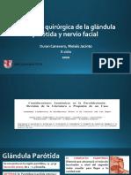 Anatomía quirúrgica de la glándula parótida y nervio facial