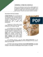 Sistema Nervioso Central. Tronco Cerebral