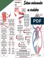 Mapa-mental-Sistema-cardiovascular-ou-circulatório