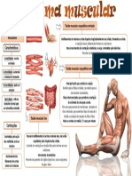 Mapa-mental-sistema-muscular