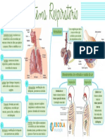 Mapa-mental-Sistema-respiratório