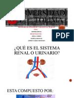 Universidad del      Tolima sistema Renal