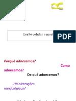 Aula 3 - Alterações Fisiopatológicas