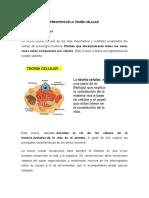 PRINCIPIOS DE LA TEORÍA CELULAR