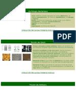 57706395-Morfologia-Bacteriana.doc