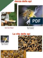 Danza delle api etologia