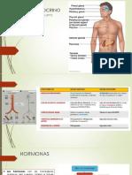 clase SISTEMA ENDOCRINO.pdf