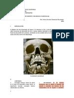 3. CRECIMIENTO Y DESARROLLO CRANEOFACIAL