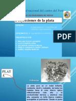 PROYECCIONES DE LA PLATA- 2020