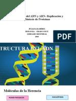Estructura ADN- ARN-replicación y sintesis de proteínas