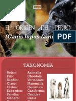 CLASE origen del perro.pdf