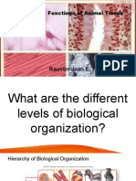 Structure and Functions of Animal Tissue.pptx