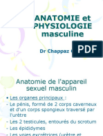 anatomie-physiologie-mascul