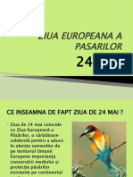 ZIUA EUROPEANA A PASARILOR-ioana c.(antipa)