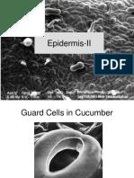 Epidermis-Part-2
