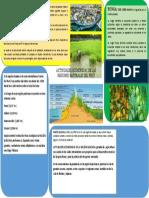 ACTIVIDADES ECONÓMICAS DE LAS REGIONES NATURALES DEL PERÚ.docx  2kdg