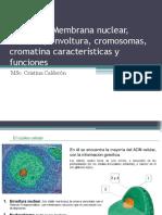 1 El núcleo envoltura cromosomas cromatina.pdf