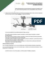 Taller ADN.pdf