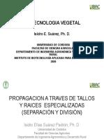 Tema 16. PROPAGACION A TRAVES DE TALLOS Y RAICES  ESPECIALIZADAS 2020 (1)