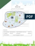 animal-cell-diagram.pdf
