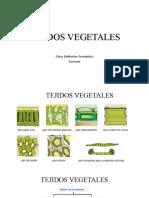 tejidos vegetales botanica taxonomica