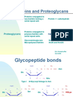 glycoproteins_proteoglycans