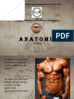 curs_7_anatomie_muschi.pdf