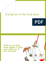 Disruption-to-Food-Chains