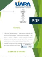 Neuronas diapositiva psicologia general Rosalba.pptx