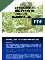 Corn Production & Corn Pests in Brunei Darussalam