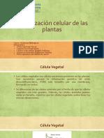 Organización celular de las plantas