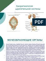 Bioritm Mochevidel Sistem