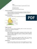 Tipos de neuronas y función.docx