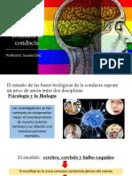 ppt 2Bases biológicas de la conducta la conducta