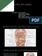 músculos del cráneo.pptx