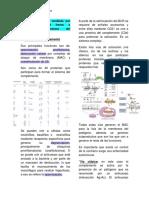 S. complemento.pdf
