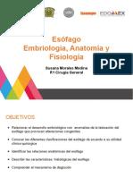 Embriología, Anatomía y Fisiología del Esófago