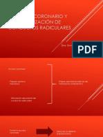 Acceso coronario y localización de conductos radiculares