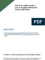 pulpa 1.pptx